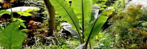 palm kopen