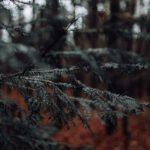 Cedar hout: ongetwijfeld mooi en ongelooflijk duurzaam